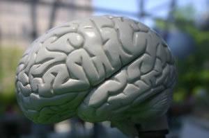 Modelo de cerebro