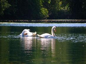 Ecosistema fluvial