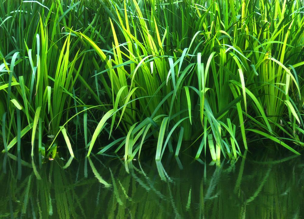 Pin Algas Plantas Acuáticas Marinas O De Agua Dulce Se Reconocen Las