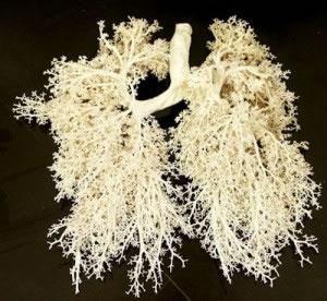 Los seres humanos poseemos pulmones