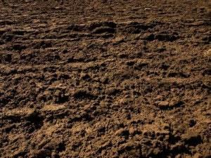 Tipos de suelos for Suelo organico dibujo animado