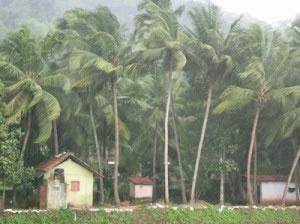 Clima Tropical húmedo