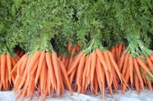 Las zanahorias son un tipo de planta comestible