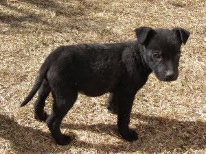 """¡Perro pequeño! En esta frase el adjetivo """"pequeño"""" califica y completa al sustantivo de la oración."""