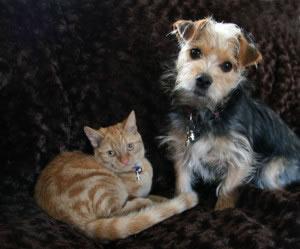 El gato y el perro son algunos de los tipos de animales que el ser humano ha domesticado.