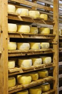 Los quesos y otros lacteos, contienen importantes cantidades de grasas esenciales
