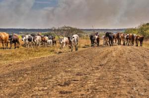 Pastoreo nómada