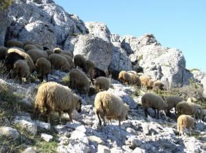 ganadería de montaña