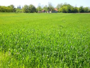 Los diversos tipos de pastos, cubren grandes extensiones del planeta.