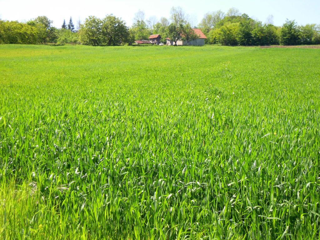 Tipos de pasto for Tipos de cesped natural para jardin