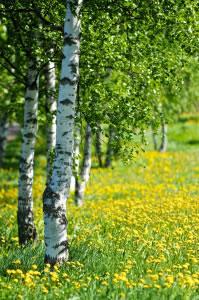 """Las zonas boscosas, estepas, llanuras e incluso zonas de montaña, suelen estar cubiertas de plantas usadas como pasto """"pastizales""""."""