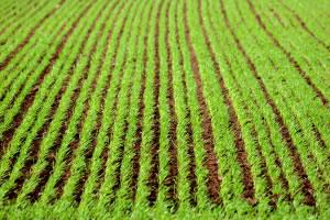 Sembradíos para la agricultura