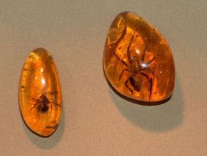 Fósil de insectos