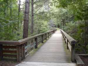Puente de madera en bosque