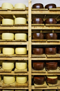 Varios tipos de quesos