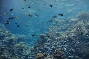 Arrecife marino con peces