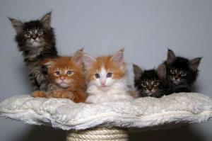 Gatos recién nacidos
