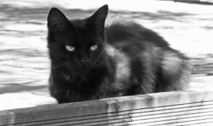 Gato negro, ojos claros