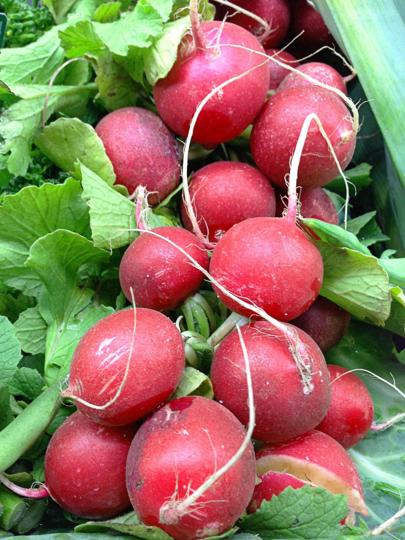 , hierbas y otras plantas se cuentan entre las verduras, además de