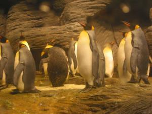 Foto de pingüinos en bioma ártico.