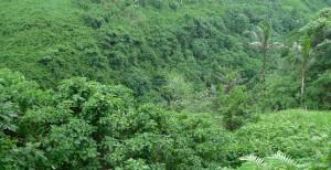 Selva, conjunto de sistemas ecológicos más diversos en flora y fauna.
