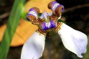 Flor morada con blanco