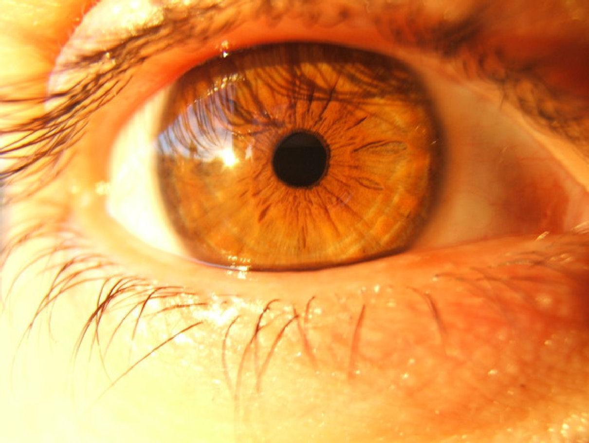 tipos de ojos tipos de