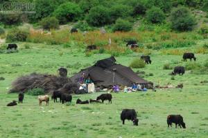 Comunicad de pastoreo nómada.