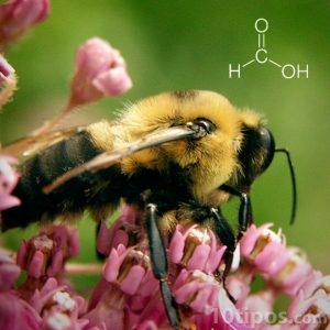 Las picaduras de abeja contiene ácido fórmico