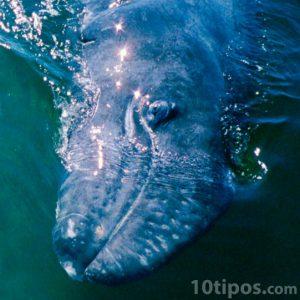 Ballenas, animales marinos