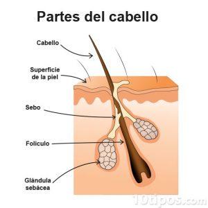 diagrama del cabello