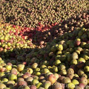 Producción de manzanas