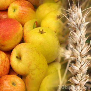 Una alimentación saludable incluye carbohidratos y fibras. Manzanas y granos.