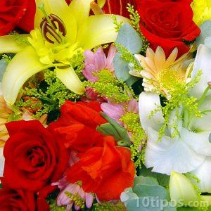flores de colores vivos