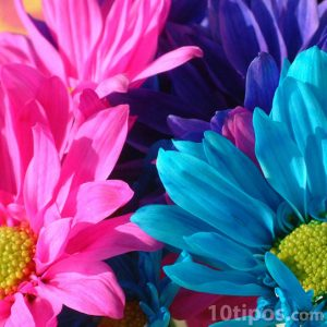 Flores de colores psicodélicos