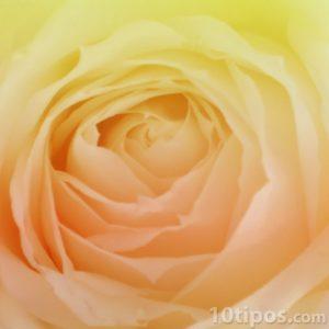 Rosa con colores pasteles