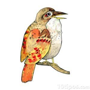 Dibujo de un pájaro realizado con acuarela