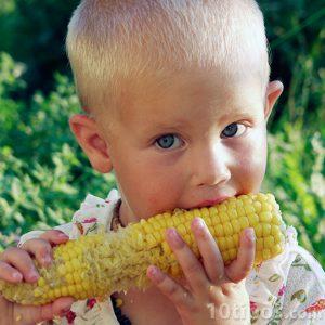 Niño comiendo maíz