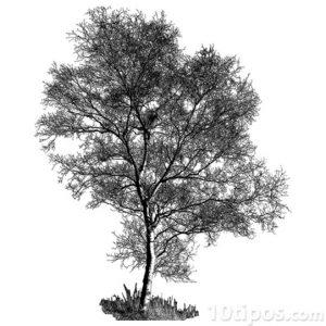 Dibujo a mano de árbol hecho con tinta