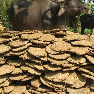 Escremento de toro para usar como bioenergía