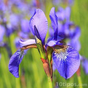Flor con pétales de color violeta