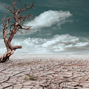 Sequía severa y árbol seco