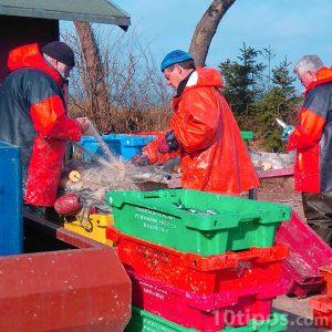 Pescadores preparando sus redes