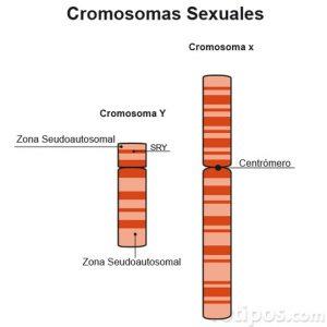 Diagrama de cromosoma