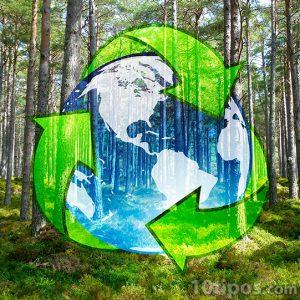 Reciclaje ayuda a los bosques