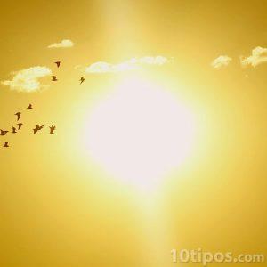 Sol de media tarde con aves de paso