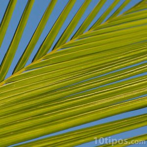 Hojas de palma con fondo azul