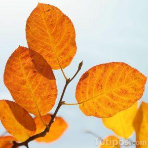 Hojas típicas de otoño