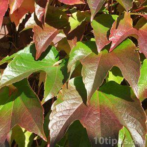 Cascada de hojas de dos colores