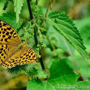 Mariposa descansando en una rama